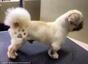 craze dog 'tattoos' sees