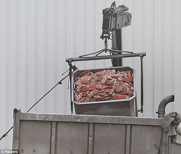 A dump truck is filled up with blocks of meat at French meat processor Spanghero's factory. French authorities blame Spanghero for the fraud that led to the horse meat scandal