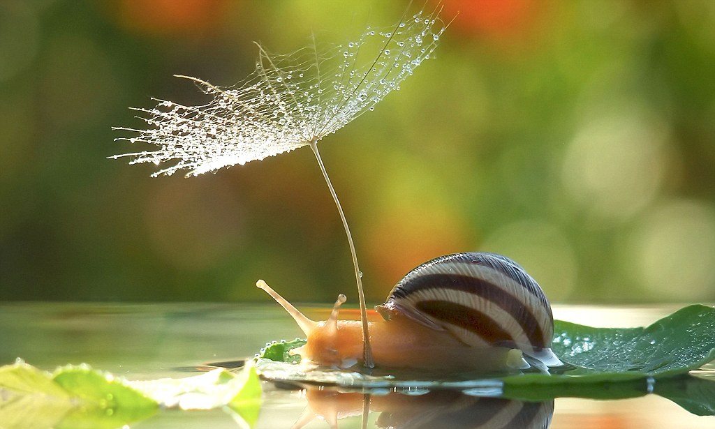 Cute Kisses Hd Wallpapers Taking Shelter From The Storm Photographs Capture Snail
