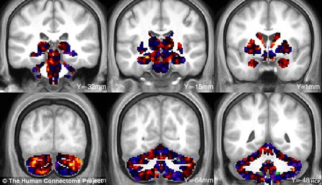 brain image facial recognition the Human Connectome Project
