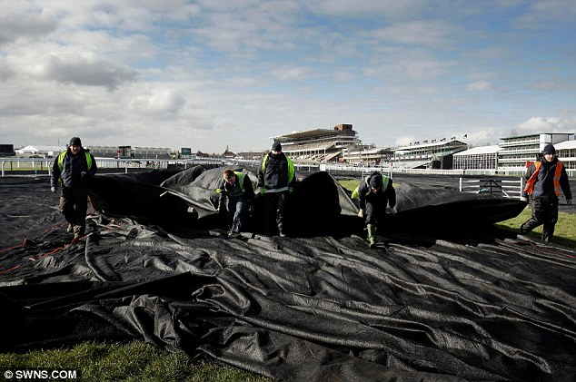 Covered up: The ground had to be protected overnight to protect the racecourse from freezing temperatures