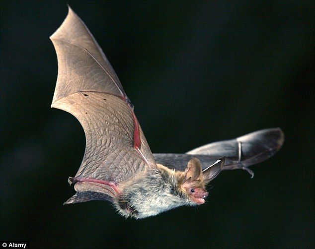 Source: Experts believe the coronavirus originated in bats