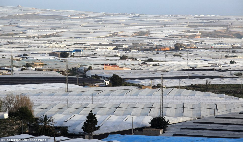 Breathtaking: These greenhouses in southern Spain cover an area of 100,000 acres, which is as large as the Isle of Wight