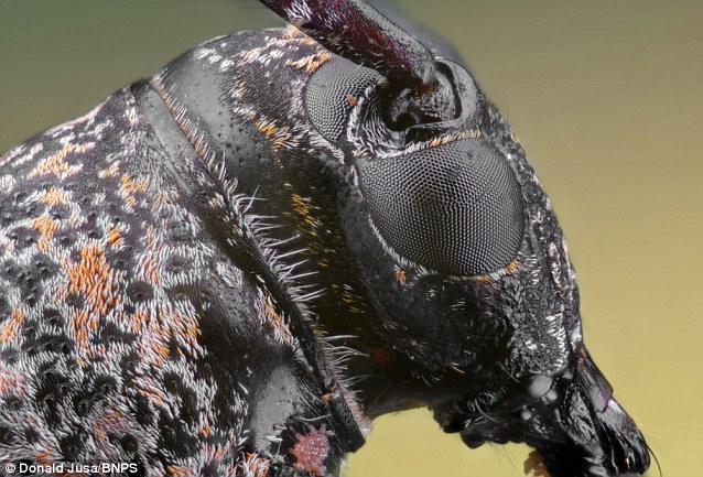 The extrodinary levels of detail show the insects in an entirely new light