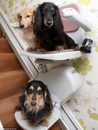 Doting dog lovers Harry and Sheila Lee install 1,500 ...