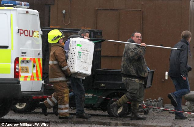 Firefighters rescued an otter and two dwarf crocodiles from the fire at Five Sisters Zoo, West Calder, West Lothian