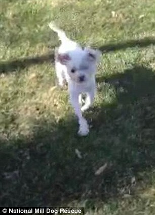 Lizzy on grass