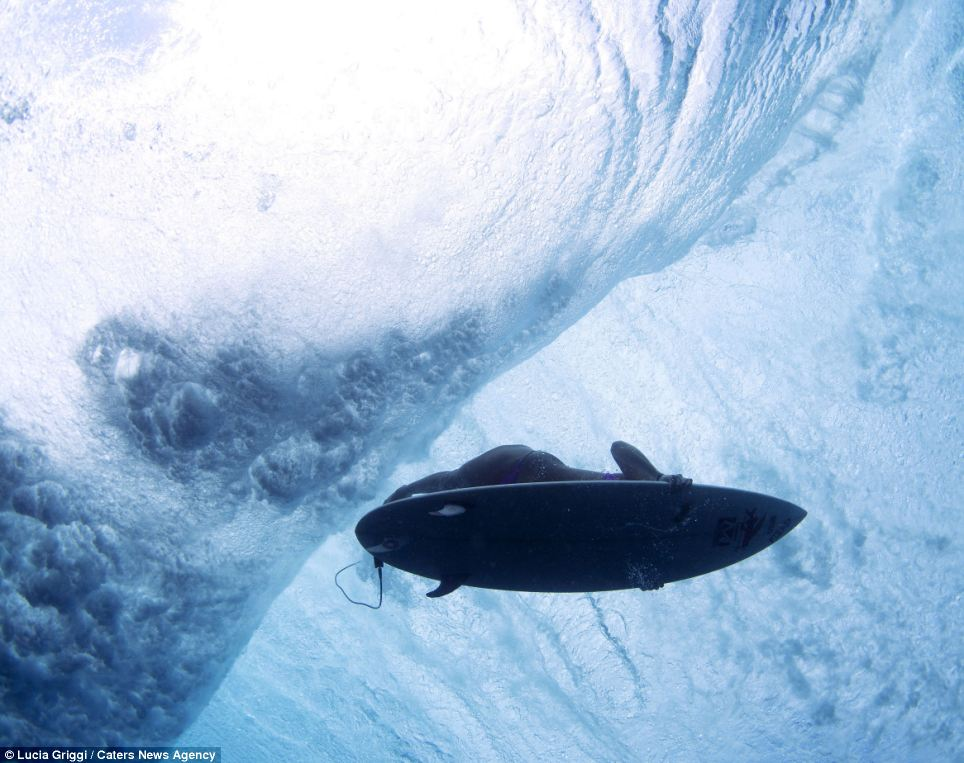 Truly breathtaking pictures Photographer braves shark