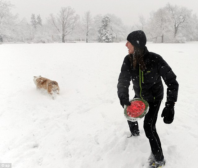 Good job he's not white: Laura Rice plays in the snow with her dog, Tussin, at Chautauqua Park in Boulder, Colorado