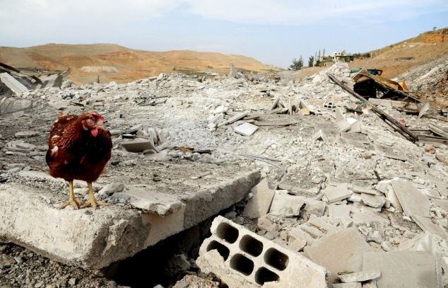 Razed to the ground: A chicken which survived the airstrike stands among the flattened buildings
