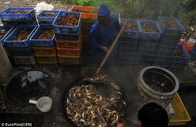 Grim work: A worker fishes dead birds from the bubbling pot, as thousands more packed in crates behind him wait to meet their fate. The Chinese government has ordered the mass extermination of birds