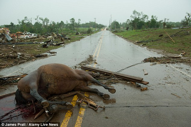 Apocalyptic: A dead horse blocks the road at Penn Avenue and 134th street