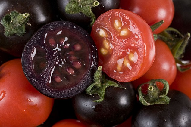 Enriched tomatoes: The genetically modified variety has been shown to have health benefits