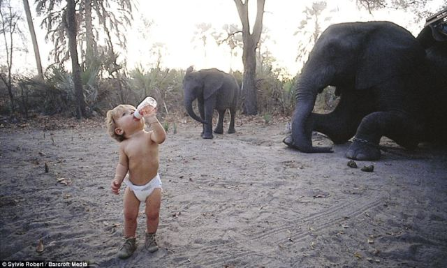Unique start: Tippi, aged one and a half, drinking from her bottle among an elephant herd in Okavango Swamps, Botswana