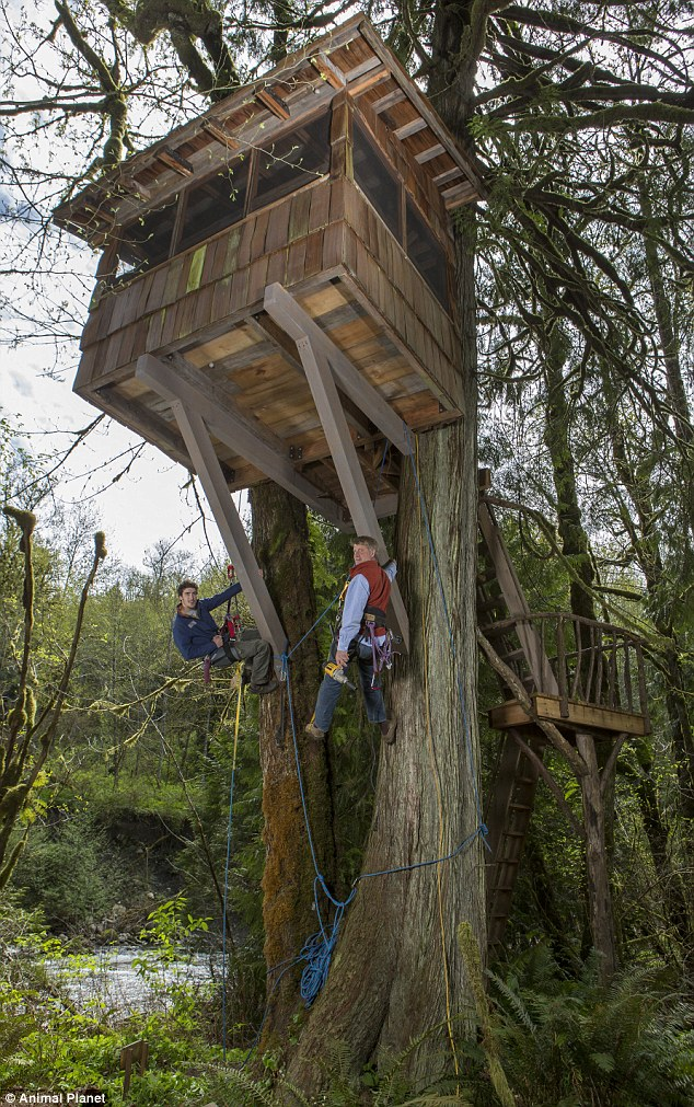 The Seattle 'tree House Master' Who Can Show You How To Build The