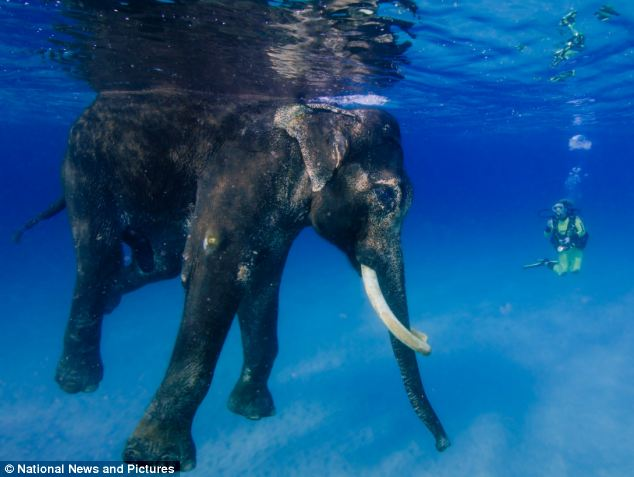Wolfgang Zwicknagl took the pictures in the Andaman Islands, an archipelago that is part of India in the bay of Bengal