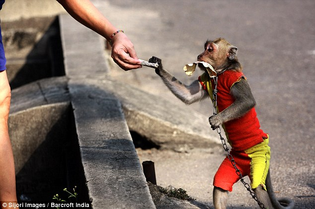 Image result for monkey asking for money