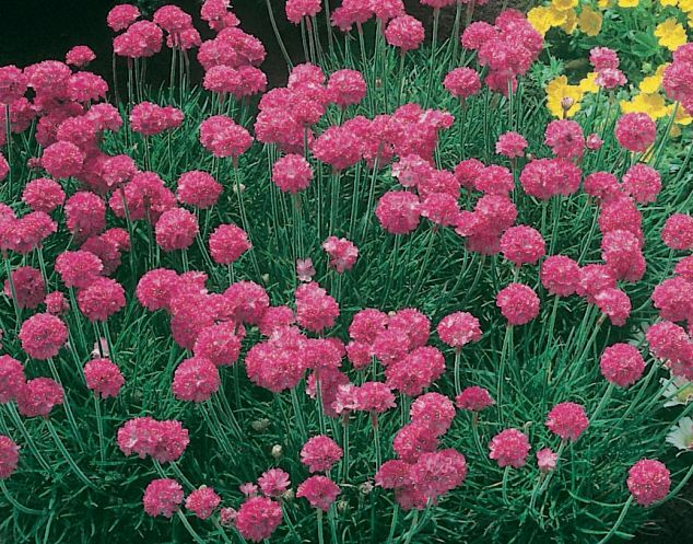 Image result for plant perform arithmetic