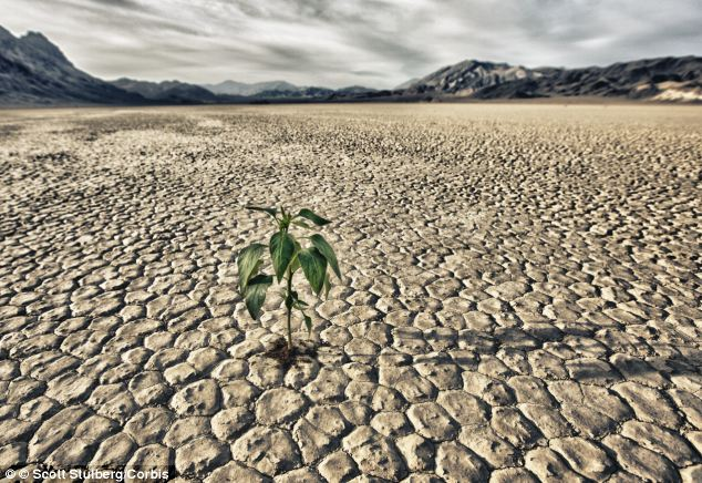 Farmers in arid places, including Death Valley in California, pictured, could soon have a cure for the droughts that cause problems to their crops in the form of powdered water.