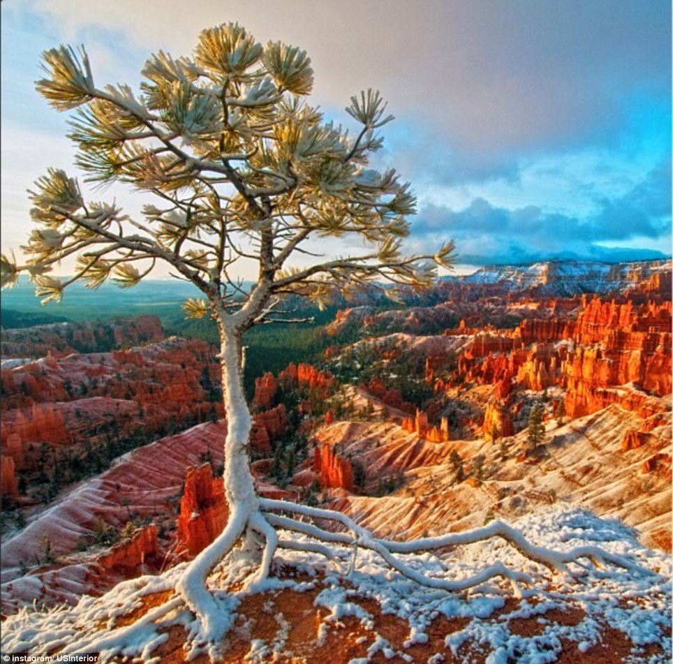 Utah: A tree's roots spread out over the Bryce Canyon National Park