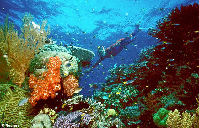 Fragile: The 1,200 mile reef off the coast of Queensland is home to endangered species