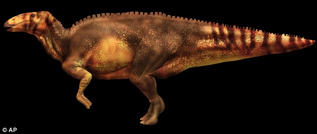 An artist rendering provided by the National Geographic Society shows what a hadrosaur is believed to have looked like