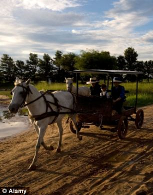 Old Colony Mennonites do not use motorised vehicles or electricity