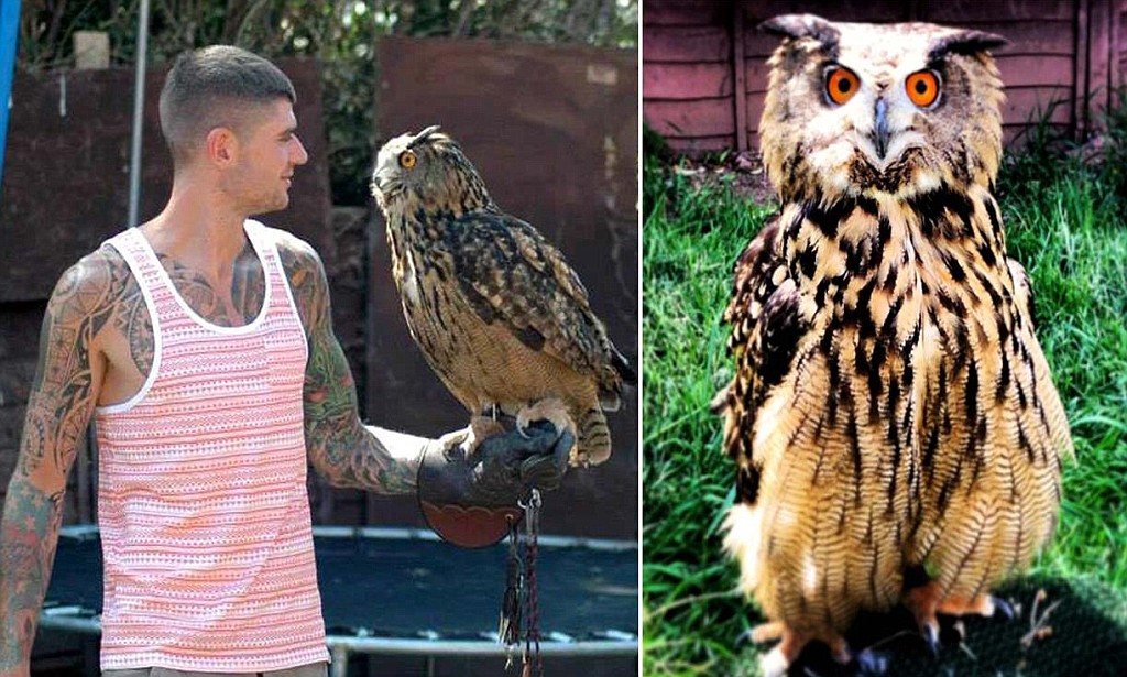 Beware the eagleowl Giant bird capable of eating cats and dogs escapes from aviary sparking