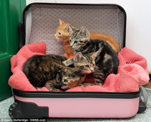 I Don T Want These Kittens I M Off On Holiday What Callous Pet Owner Told Shelter Staff As She Dumped Litter Of Eight Week Old Cats Daily Mail Online