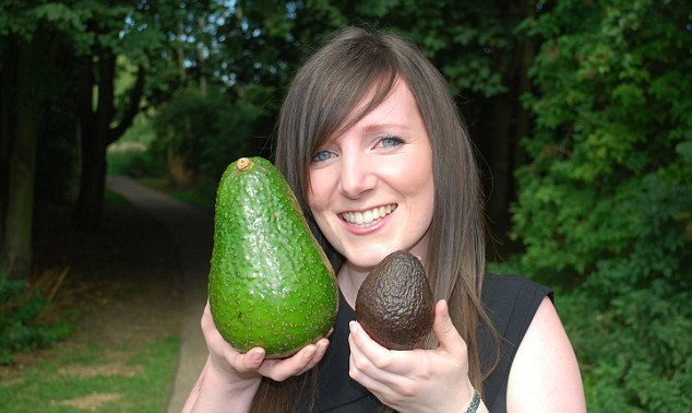 Super-sized: Tesco buyer Emma Bonny shows how large an avozilla is compared to a standard avocado
