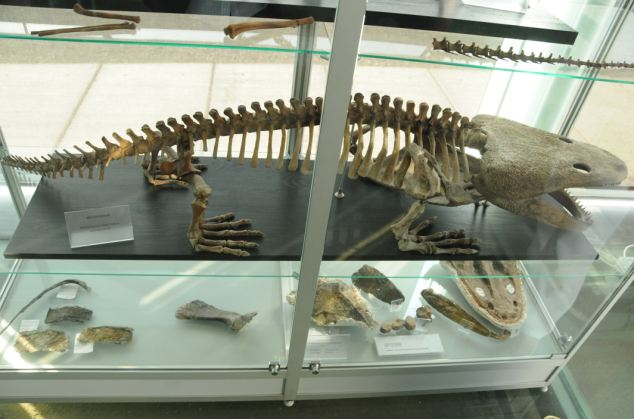 Metoposaurus diagnosticus