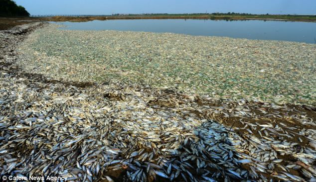 Locals said the river was covered by the dead fish and that they 'looked like snowflakes'