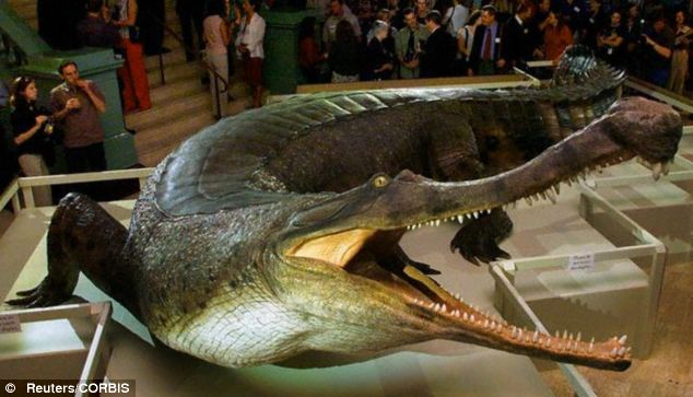 How crocodiles survived in a dinosaurs world Jurassic