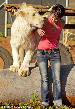 Annel Snymans pet LION Timba eats 9lbs of food a day and