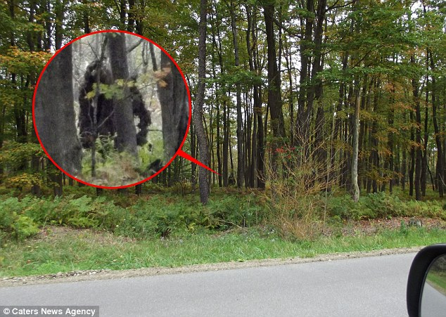 Apeman: A close up shows one of the 'beasts' spotted just yards from a main road through trees in Kinzua State Park