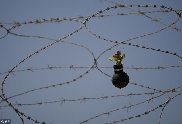 A flower hangs from the barbed wire of Israel's barrier: Still under construction, the Israeli West Bank barrier is a security wall that will eventually stretch 430 miles around the entire West Bank region