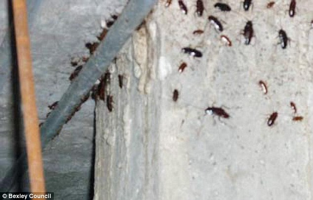 'Serious infestation': More cockroaches can be seen on the wall and ceiling of the undercroft in another photo taken by environmental health teams from Bexley Council