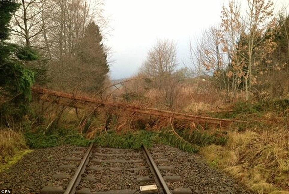 Bloqueado: Un árbol en la línea, al sur del paso a nivel Moulinearn en Perthshire, vientos tan fuertes bateador Bretaña