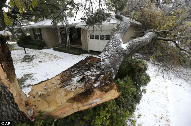 Storm: A tree felled by ice rests near a house on Friday in Richardson, Texas. Winter storm and ice warnings are in effect through much of today for parts of six states in the Midwest