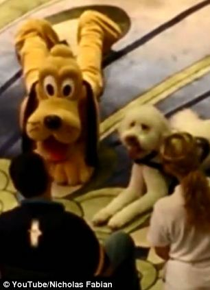 wheelchair dog rental chairs for wedding adorable video shows the moment playful service meets pluto on disney fantasy cruise | daily ...