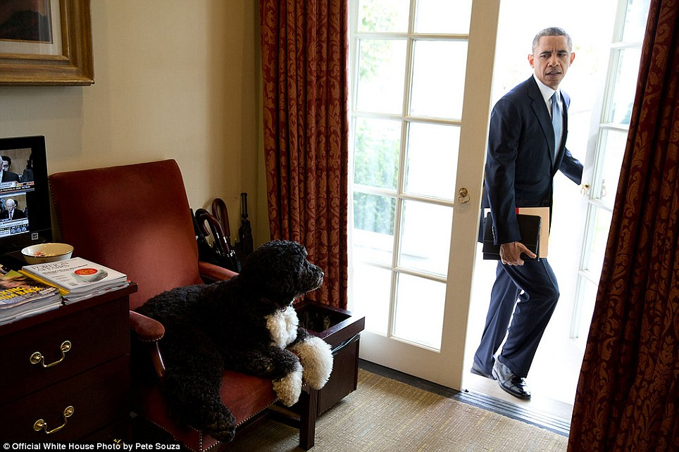 'Bo was just hanging out in the Outer Oval Office when the President walked in to begin his day. Each morning, the President always enters through this door rather than the direct outside door to the Oval Office'
