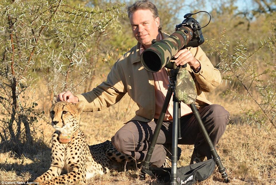 Heads up: El guepardo es perfectamente feliz de dejar que el señor Du Plessis acariciarle