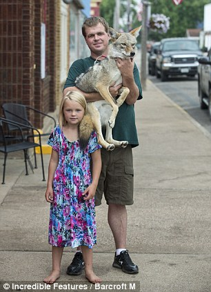 baby chair bath covers scotland the eight-year-old wisconsin girl who has a pet coyote called wiley | daily mail online