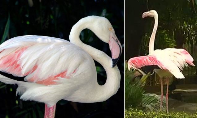 Worlds oldest flamingo which has been in the same Australian zoo since before World War II dies