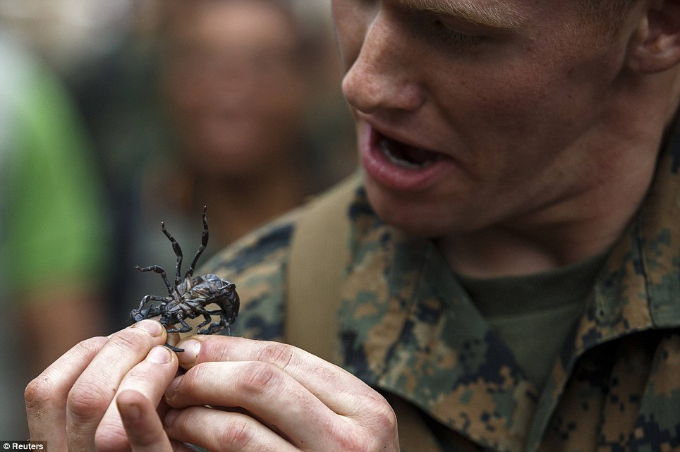 A challenge with a sting in its tail: A U.S. Marine prepares to eat a scorpion during the jungle survival exercise in Thailand