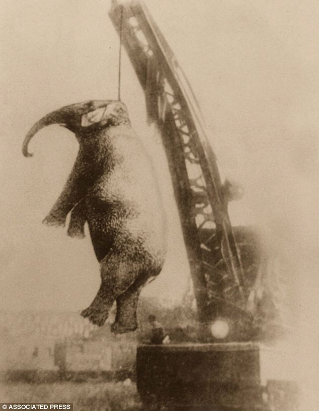 On September 13, 1916, the town of Erwin, Tennessee, hung 'Murderous Mary' the elephant after she mauled one of her keepers to death the day before
