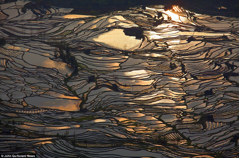 Spectacular sunset: Bathed in a glorious golden glow, this series of randomly arranged manmade rice fields reflecting the sky above have been formed over 1,300 years