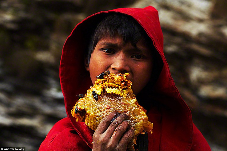 A young boy from the nearby village feasts on a piece of freshly cut honeycomb that has fallen to the ground