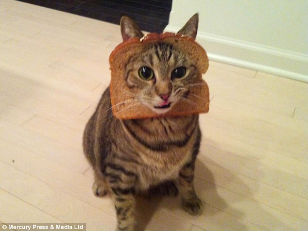 Internet Users Post Pictures Of Cats WEARING Slices Of