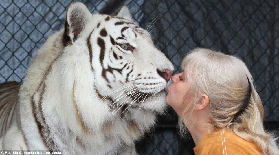 florida woman keeps two big cats in her garden and treats